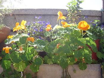 Покажете цветята във  вашата градинка... 8c5df1d7586764c9e5eef5105884180f