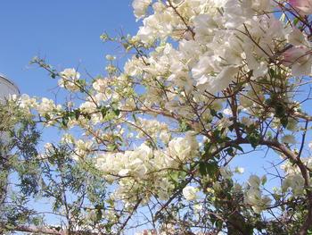 Покажете цветята във  вашата градинка... 97287d2c63a2af428e7e77d349f80eae