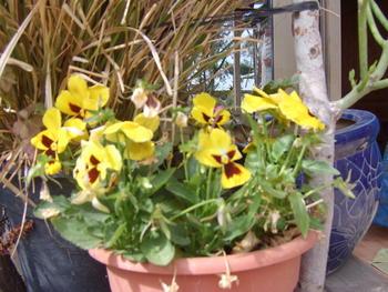 Покажете цветята във  вашата градинка... B32b7698f0503fe1210619085717d24b