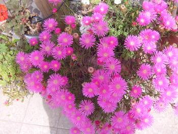 Покажете цветята във  вашата градинка... Feb78083b9bdf12db3380330177f3b23
