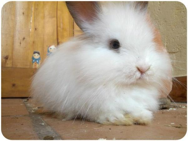 Rescate de conejos en Valencia! Urge Adopción o colaboración 9d955abb60ee5ee36d8ecee6a2bc53e9