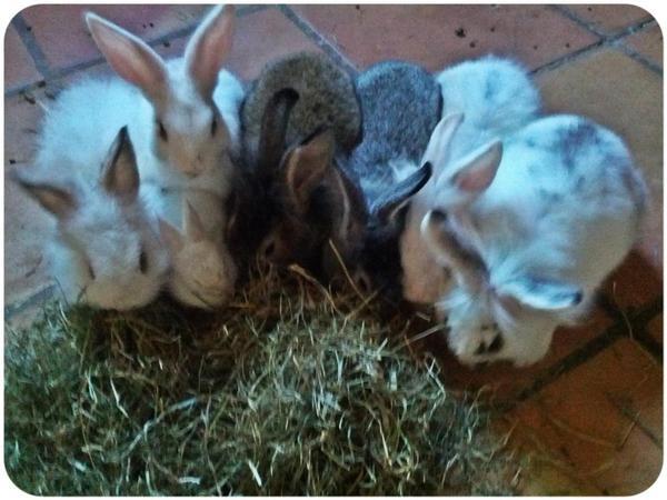 Rescate de conejos en Valencia! Urge Adopción o colaboración 9e17f05582d741df0908e1bf74b69b3a