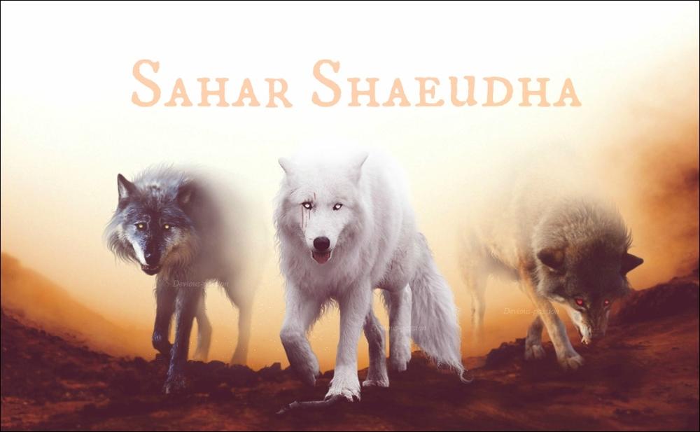Sahar Shaeudha